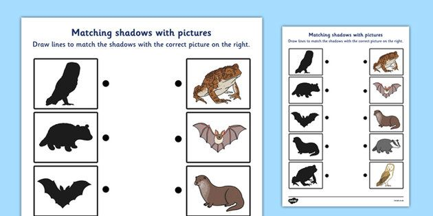 wild nocturnal animals shadow matching worksheet. Black Bedroom Furniture Sets. Home Design Ideas
