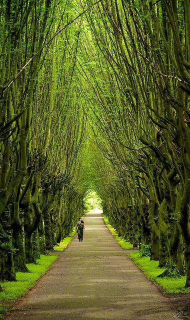 gyclli:  Spring Avenue by Peter Ras on Flickr.Tivoli Gardens Copenhagen, Denmark