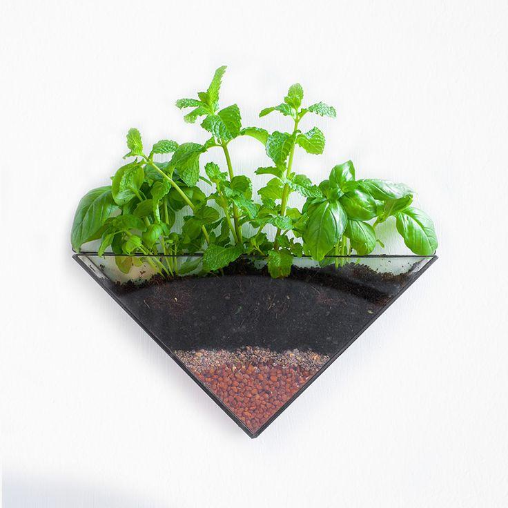 Isosceles wall terrarium