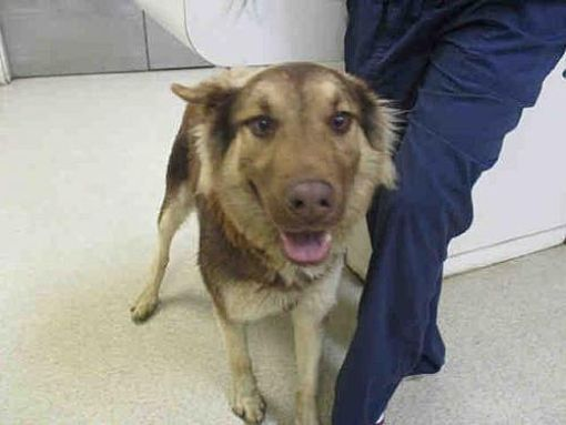 Pictures of Dog a Husky for adoption in Jurupa Valley, CA who needs a loving home.