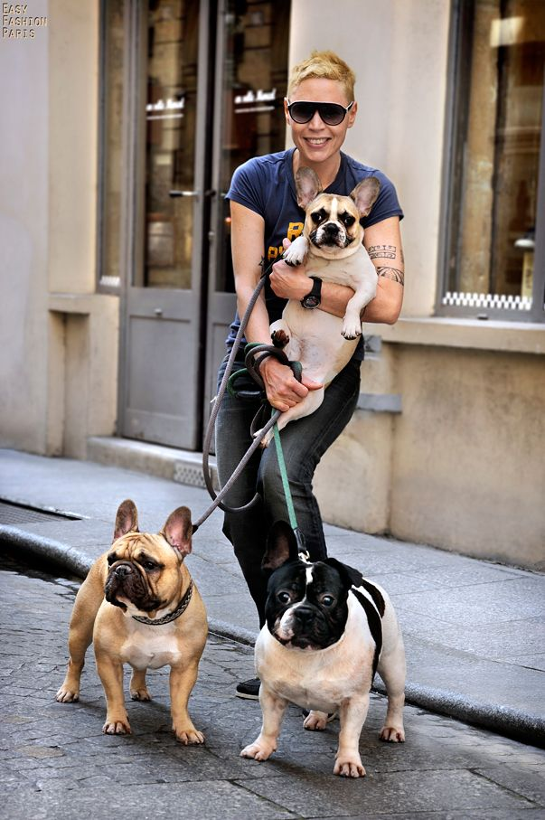 hebergement d'image French Bulldogs