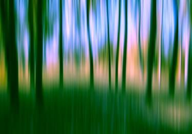 "Saatchi Art Artist igor vitomirov; Photography, ""Dream Forest"" #art"