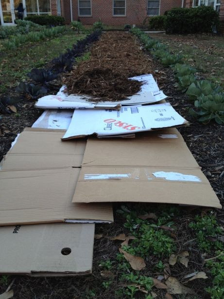 How to mulch a garden with cardboard Use this method in areas for weed suppression where you are not planting crops that season. Cardboard and non-composted mulch make surface nitrogen unavailable to plants. By the next season, you will have an area with a brand new layer of organic matter. You will be surprised at how quickly the cardboard breaks down.