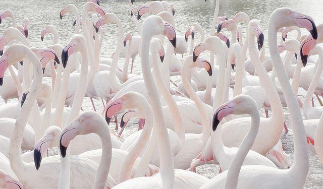 #Pinkfloyds: Animals, Flamenco, Iphone Wallpaper, Pink Flamingos, Pink Flamingoes, Pale Pink, Birds, Pastel Color