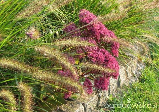 Pokażę nasz ogród - strona 298 - Forum ogrodnicze - Ogrodowisko
