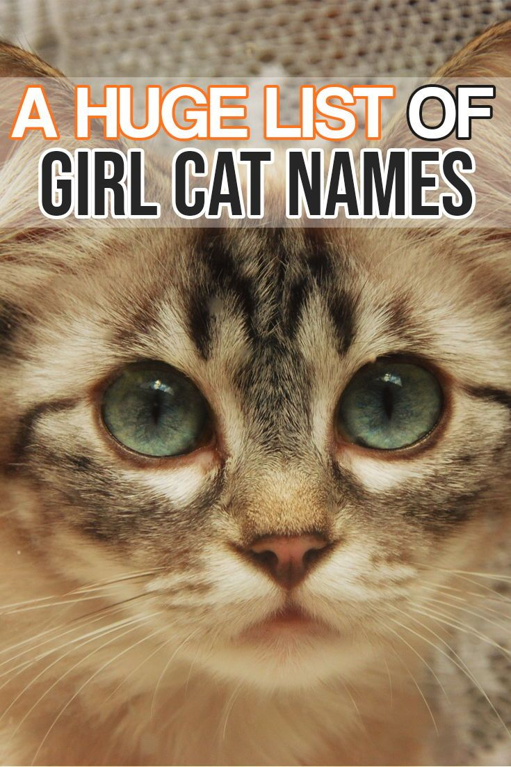 Here Is A Huge List Of Girl Cat Names For Your Amazing Girl Kitty Cat Girl Cat Names Cat Names Girl Unique Girl Pet Names