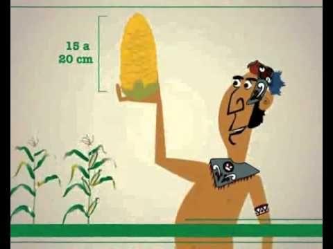 Historia del maiz