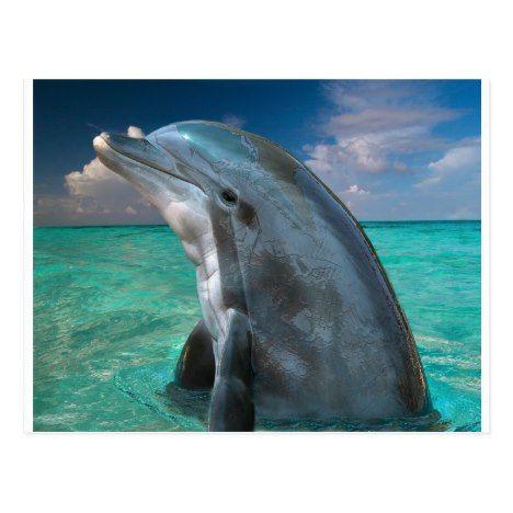 Dolphin in the Bahamas Postcard | Zazzle.com – Nicorese