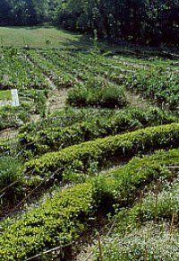 Emilia Hazelip Synergistic garden beds