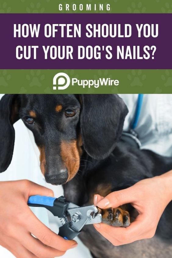 Pin On How To Trim A Dog S Nails