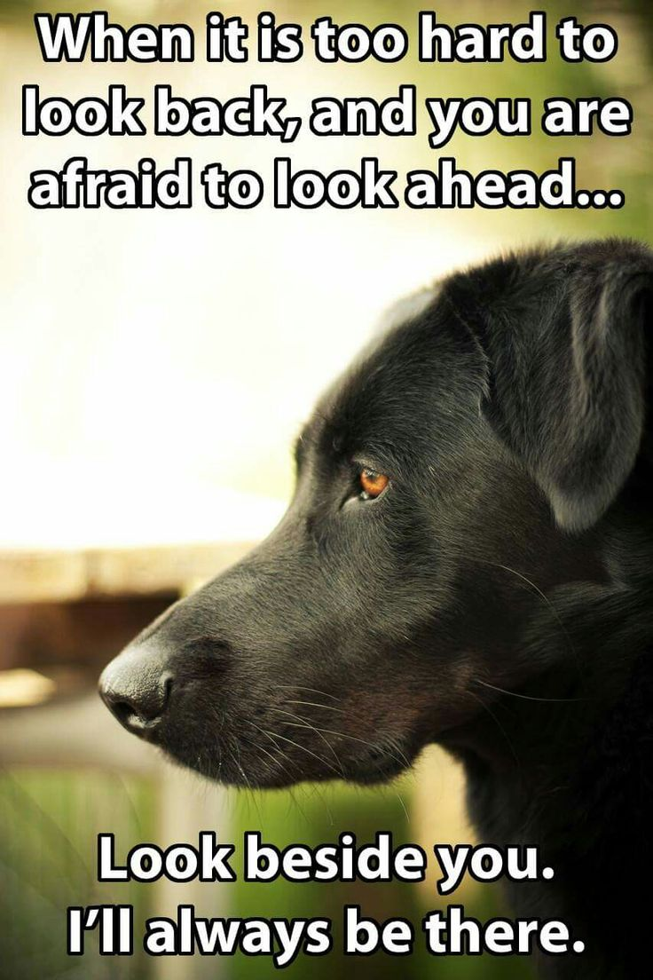 I'll always be there #petquotes #dogquotes http://www.nojigoji.com.au/