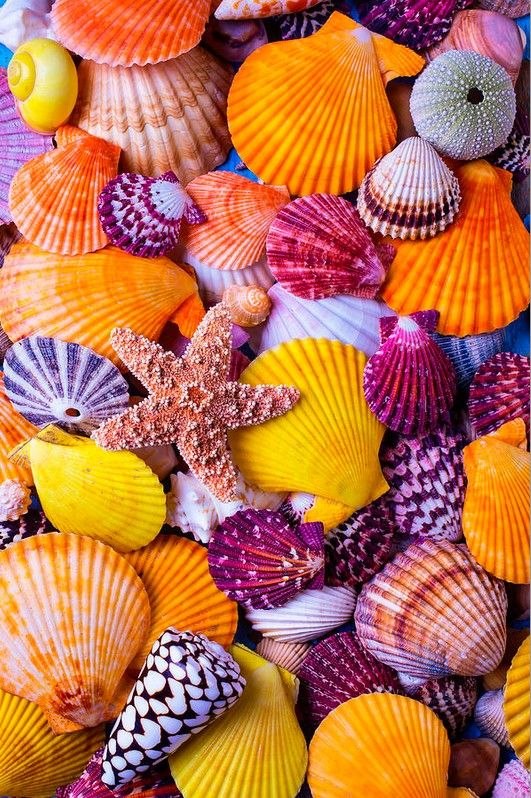 Sea shells by Garry Gay