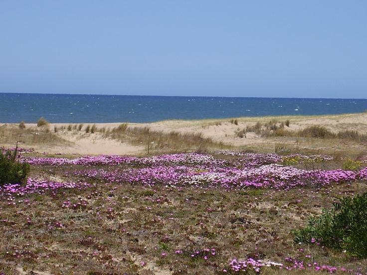 Médanos camino a José Ignacio, Playa Brava, Punta del Este.