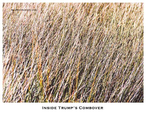 Inside Trump's Combover  The Donald: too close and personal Specs: CAPTION IS PART OF PRINTED PIECE Signed and Numbered. Edition limited to 100. Printed on acid-free archival paper. Ship all pieces rolled in heavy-duty shipping tube, insured.  http://www.finelifeart.com/inside-trumps-combover/