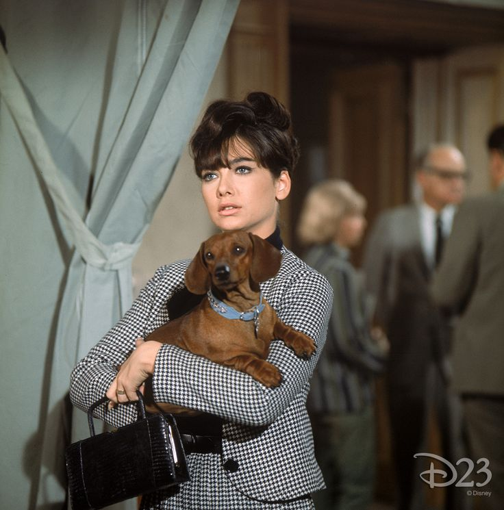 """""""The Ugly Dachshund"""" = classic Disney (: With Suzanne Pleshette and Dean Jones."""