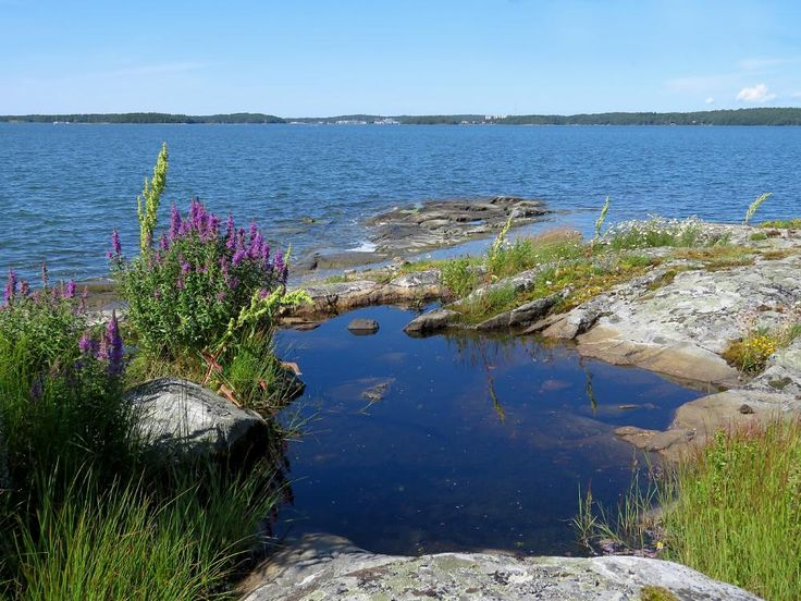 Archipelago , stone , water and flower . by henrik.gustafsson.96