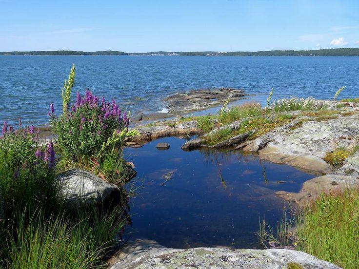Archipelago , stone , water and flower . by henrik.gustafsson.96