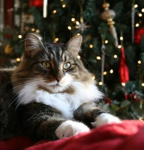 """""""I will honor Christmas in my heart, and try to keep it all the year."""" --Charles Dickens"""