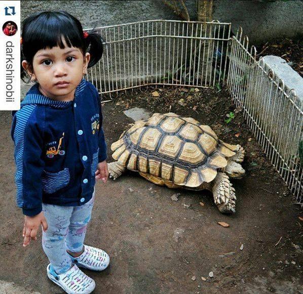 Foto kiriman @Darkshinobii  Kebun binatang sangat membantu anak2 untuk mengenal lebih dekat hewan2 yang jarang di temui di lingkungan sekitar rumah, mengenalkan buah hati terhadap hewan2 sedari dini bisa mambantu rasa sayang dan peduli terhadap binatang2... #AnimalLoversEMCO