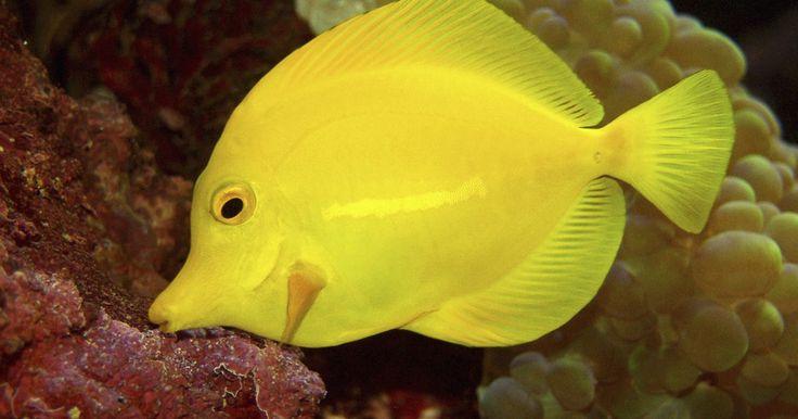 Como misturar sal marinho em um aquário de água doce. O sSal marinho é usado aquários de água salgada para aumentar a salinidade, mas alguns experts em aquários também o usam para aumentar a saúde de peixes de água doce. Quando misturado à água doce, em quantidades específicas, o sal marinho pode adicionar eletrólitos aos peixes e ajudar a criar o muco que eles precisam para ajudar na osmose. Ele ...
