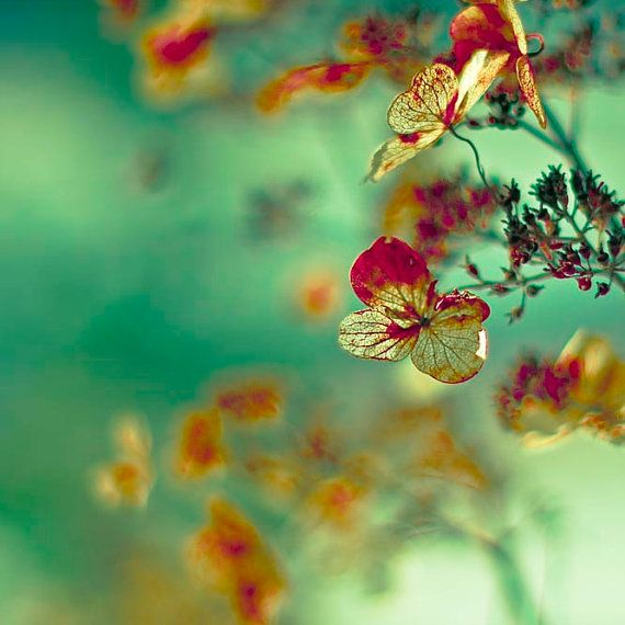: Wall Art, Shabby Chic Flower, Summer Wedding, Spring Wedding, Green, Colors, Winter Wedding, Photography, Hydrangeas
