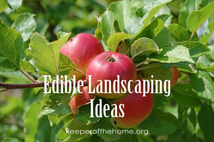 Edible Landscaping Ideas {KeeperoftheHome.org}