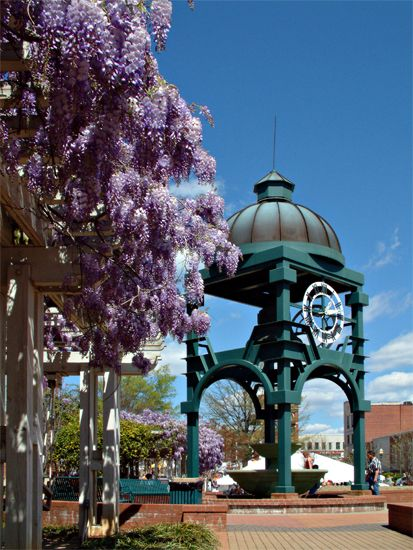 Downtown Rock Hill, SC in the springtime!  Watch out for that wisteria though.  It can grow out of control.