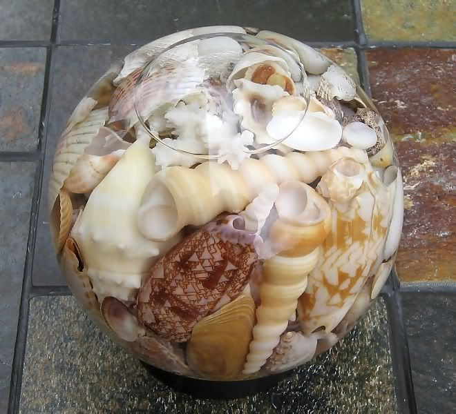 Water globes glasses and sea shells on pinterest for Shell craft ideas