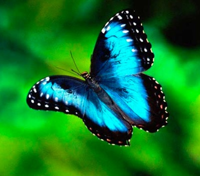 A visit to the butterfly farm would be a definite!! #aioutlet