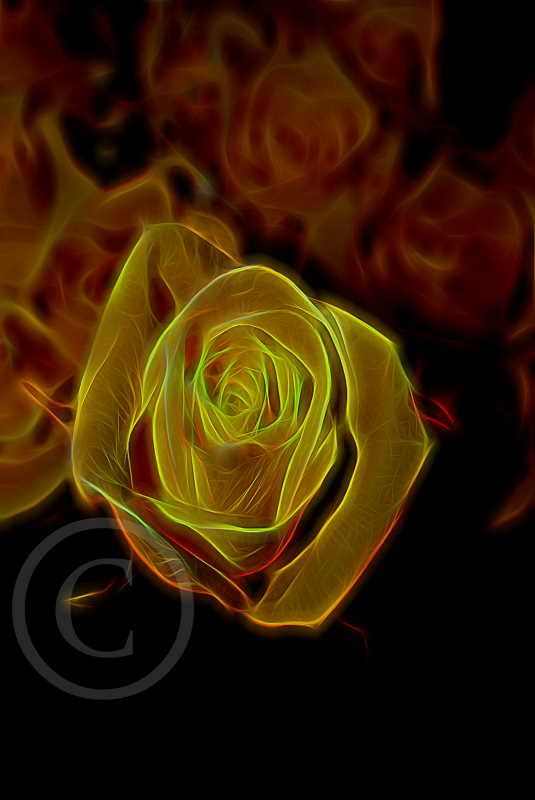 A Rose -- done with special effects
