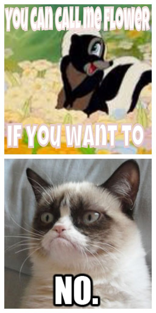 Best Grumpy Cat Name Ideas On Pinterest Angry Cat Memes - Meet the japanese cat that might just be the grumpiest kitty ever