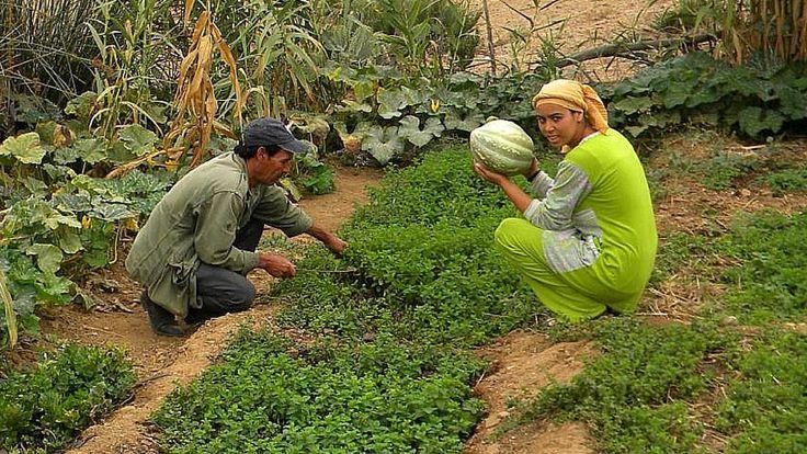 Au Maroc, le village de Brachoua s'illustre grâce à son mode de vie révolutionnaire. En trois ans, il est passé de la misère à l'autosuffisance à l'a...