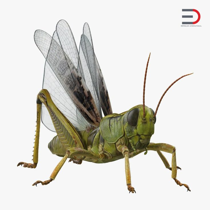 3D Grasshopper with Fur Rigged model