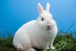 Life Span of Rabbits