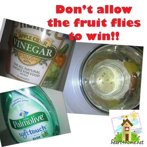 how to get rid of fruit flies with bleach