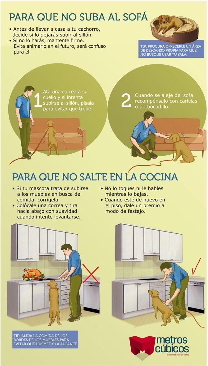 Infografía: Trucos para evitar que tu perro se suba al sillon.