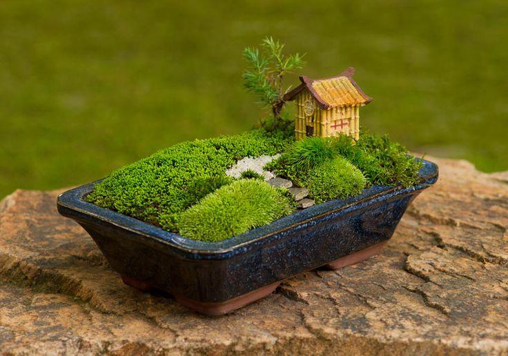 Jardin miniature fait à base de mousses dans un pot à bonsai.