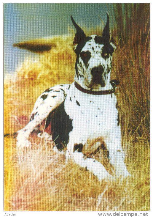 les 20 meilleures id es de la cat gorie dogue allemand sur pinterest dogue dr le chien. Black Bedroom Furniture Sets. Home Design Ideas