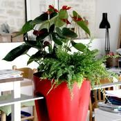 Cultiver des plantes dépolluantes