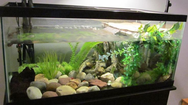 40 gallon breeder tank for young turtles.  I prefer live plants as a general rule, but I like the basking platform.