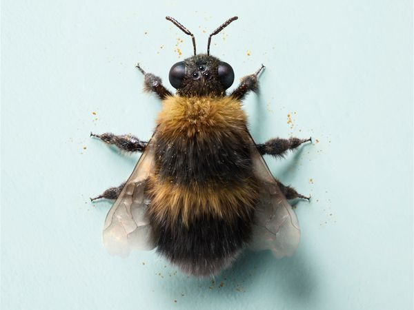 Bumble Bee by additive studios , via Behance