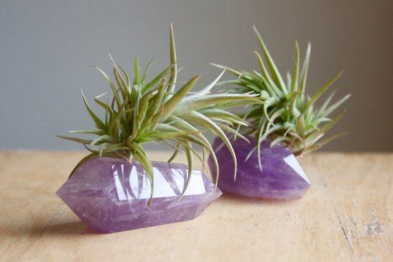 air plants & amethyst <3