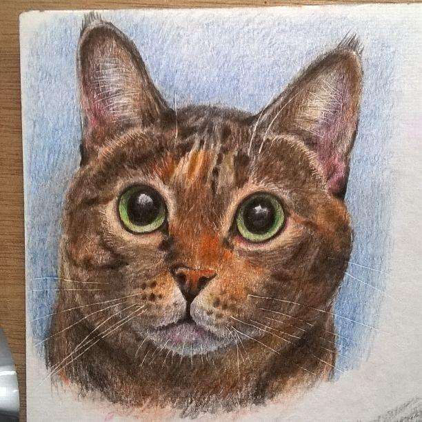 Кот. Цветные карандаши. Cat. Colored Pencils.
