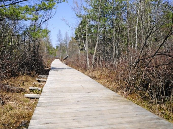 The bog leading to the woods surrounding Dunes Lake is a sensitive wetland, say environmentalists.