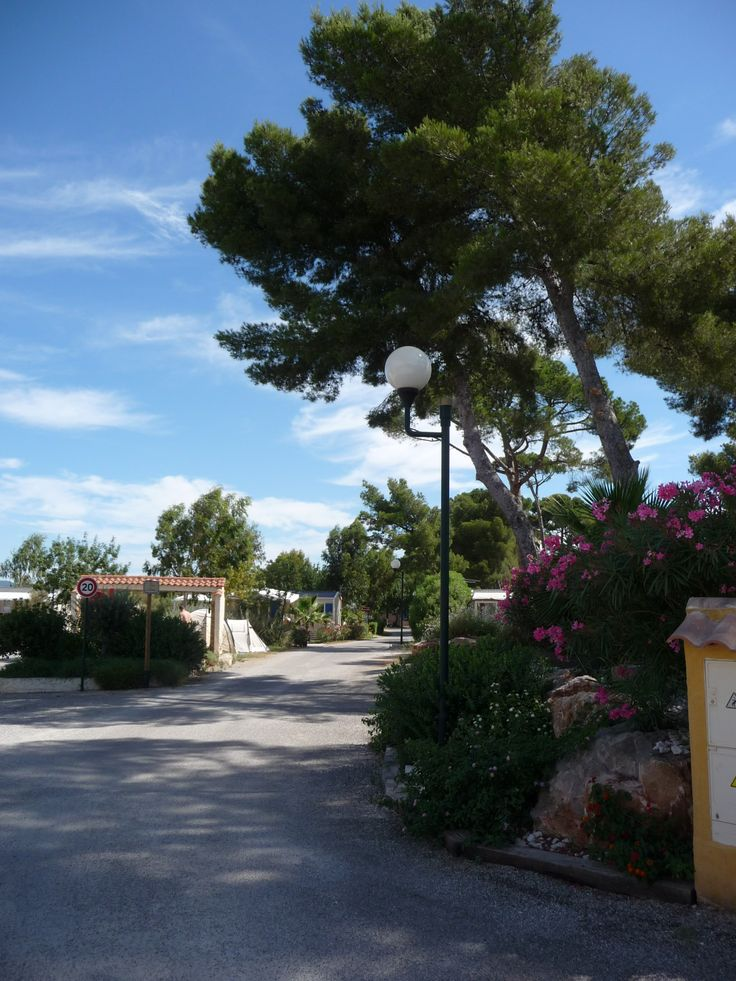 Vue de l'entrée - Photo du camping les pins maritimes