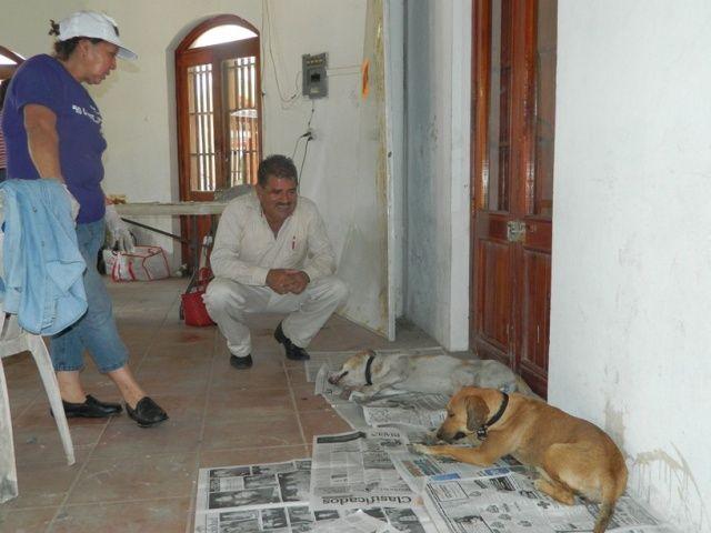 El alcalde de Tlacotalpan, C.P. Hilario Villegas Sosa, recibió a la Asociación Nuestros Hermanos Sin Voz A. C.,  para emprender la campaña de esterilización de perros y gatos.