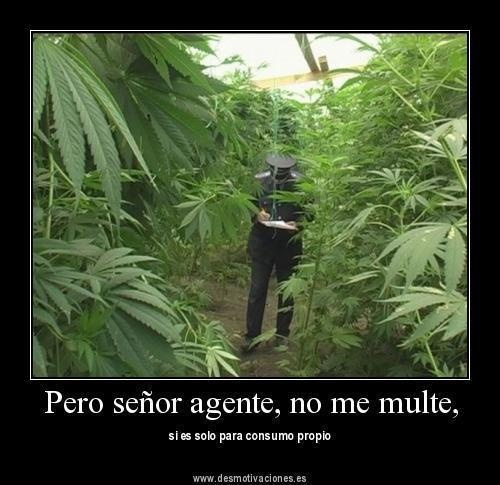 frases de marihuana chidas marihuana green world tour Small Living Room Layout Very Small Living Room Decorating