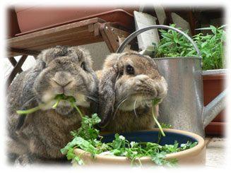 Marguerite et Cie, site d'information sur le lapin de compagnie . Je recommande se site a 100%!!