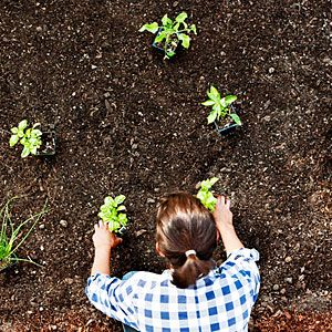 Essential fall planting tips   Provide room to grow   Sunset.com