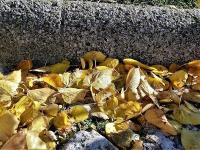WWW Wiersze Wycieczki Wspomnienia: Haiku o jesieni: Młode pączki liści